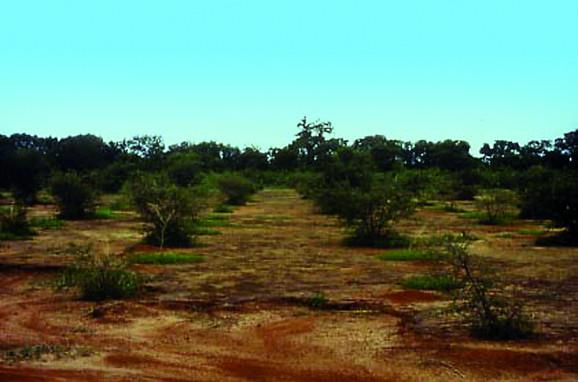 Arbole, Burkina Faso, 1990 (2 years later)