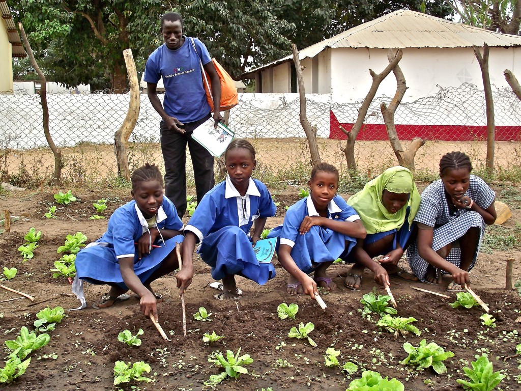 A school in Gambia received seeds from Seeds for Food