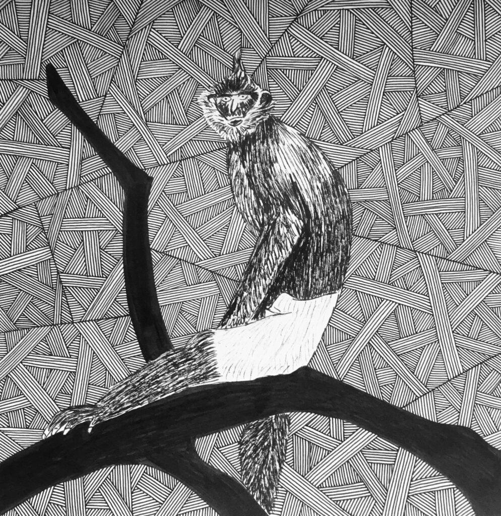 Delacour's langur sitting on a branch